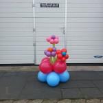 Ballonnenbloem in pot